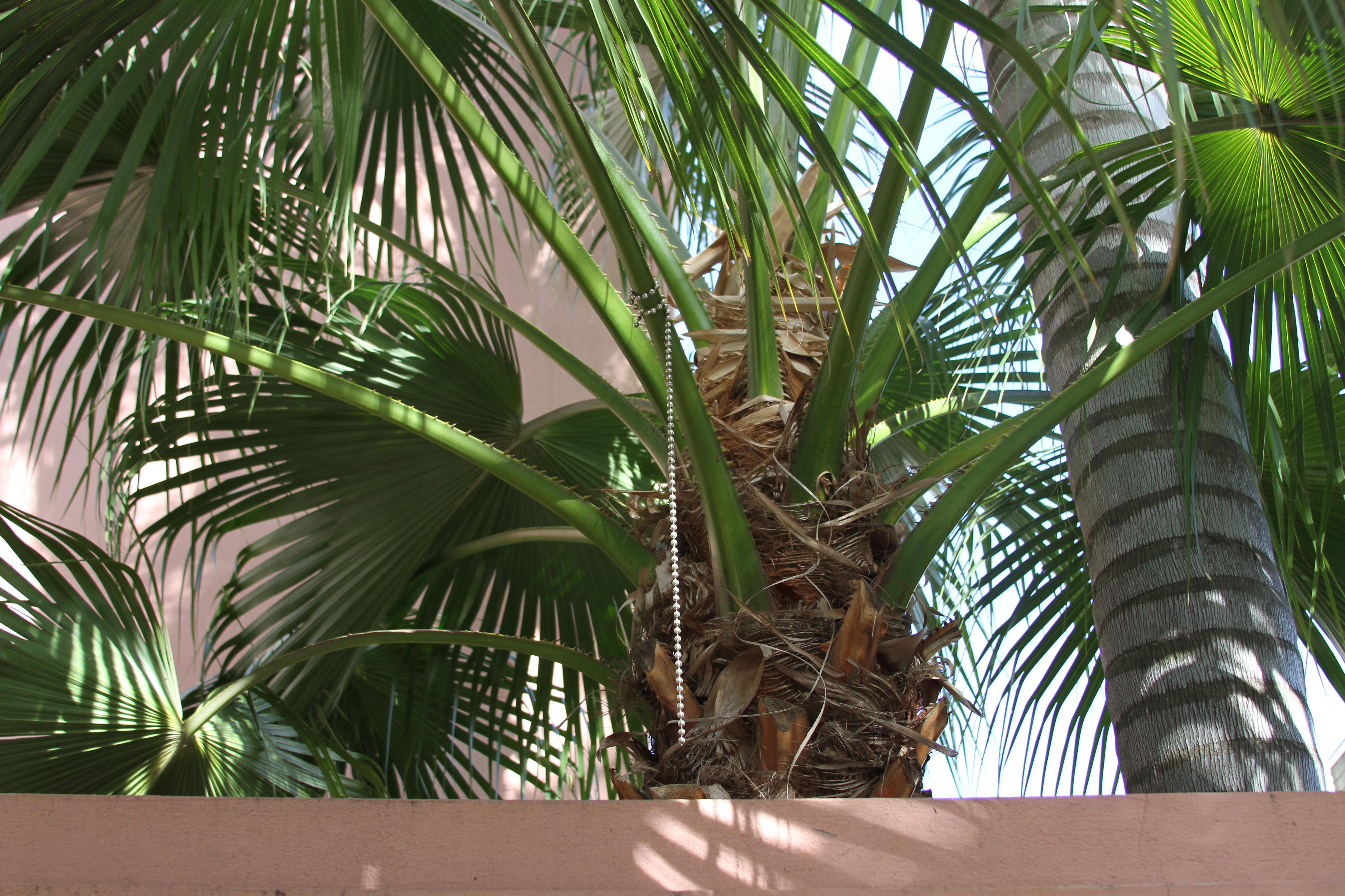 Palm Tree Beads